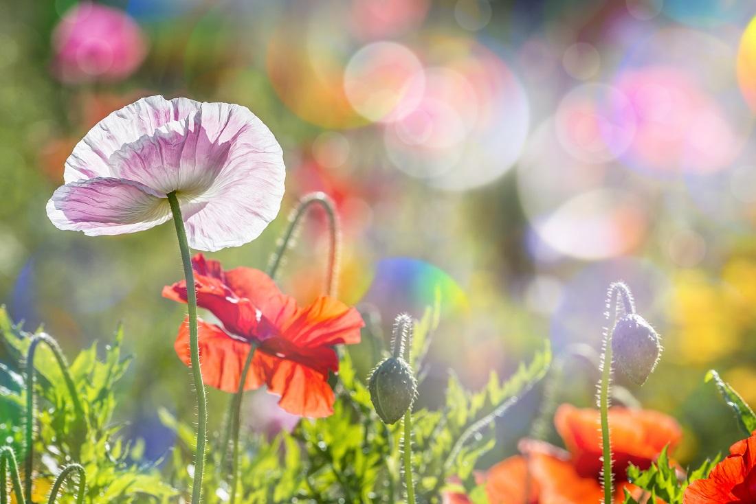 Farebné kúzlo jarných kvetov!