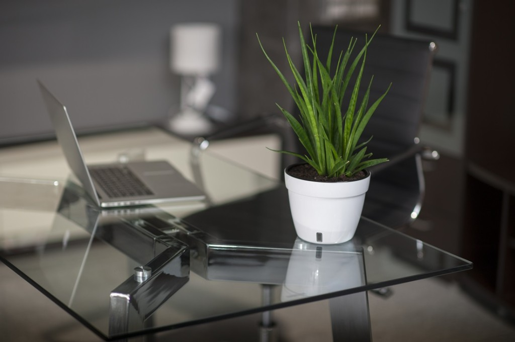 Glass table in modern office, table pot and chair