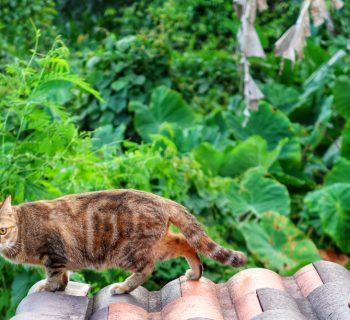 milovníkov zvierat Online Zoznamka Shenzhen dátumové údaje lokalít